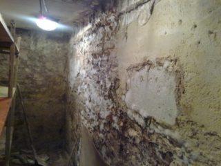 stěna napadena dřevokaznou plísní