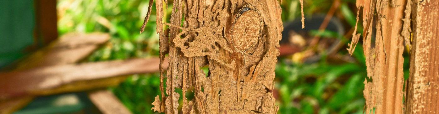Sanace dřeva