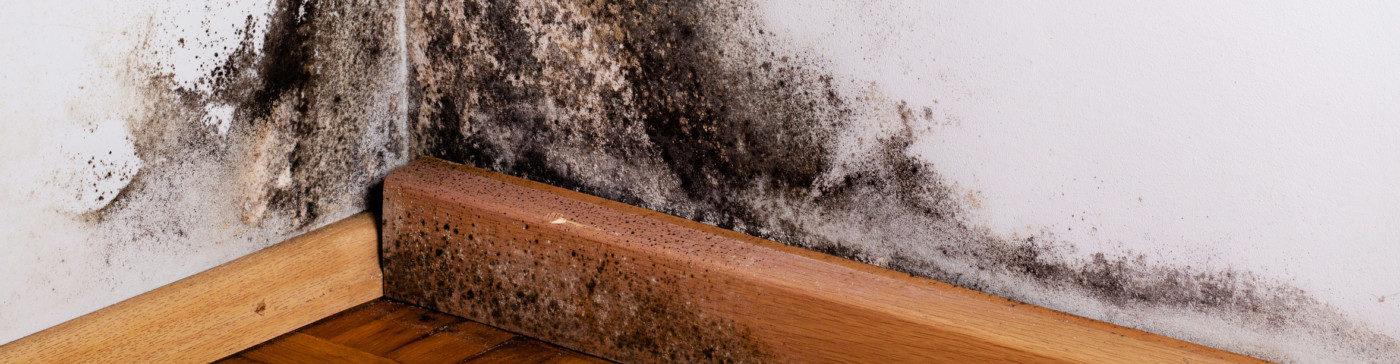 Likvidace plísní v domě