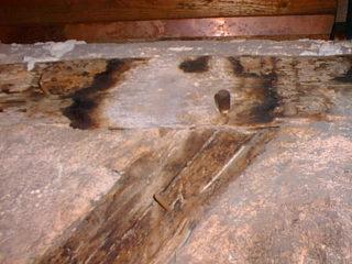 dřevokazný škůdce napadne jakoukoliv část domu, třeba i půdu