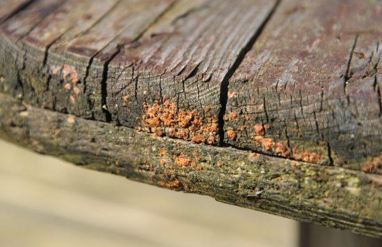 růst houby na trámu