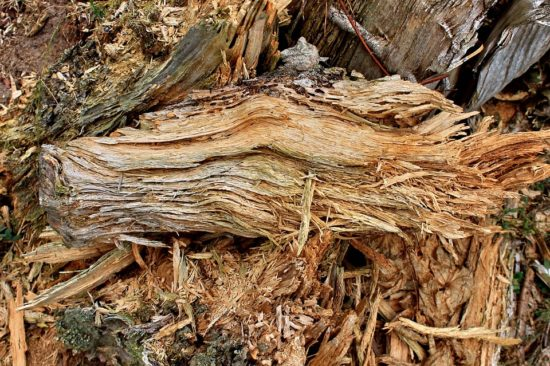 napadené dřevo
